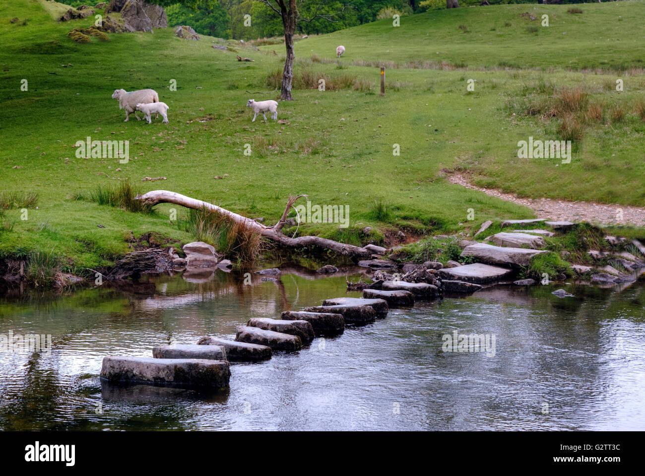 Stepping Stones, River Rothay, Lake District, Cumbria, England, UK - Stock Image
