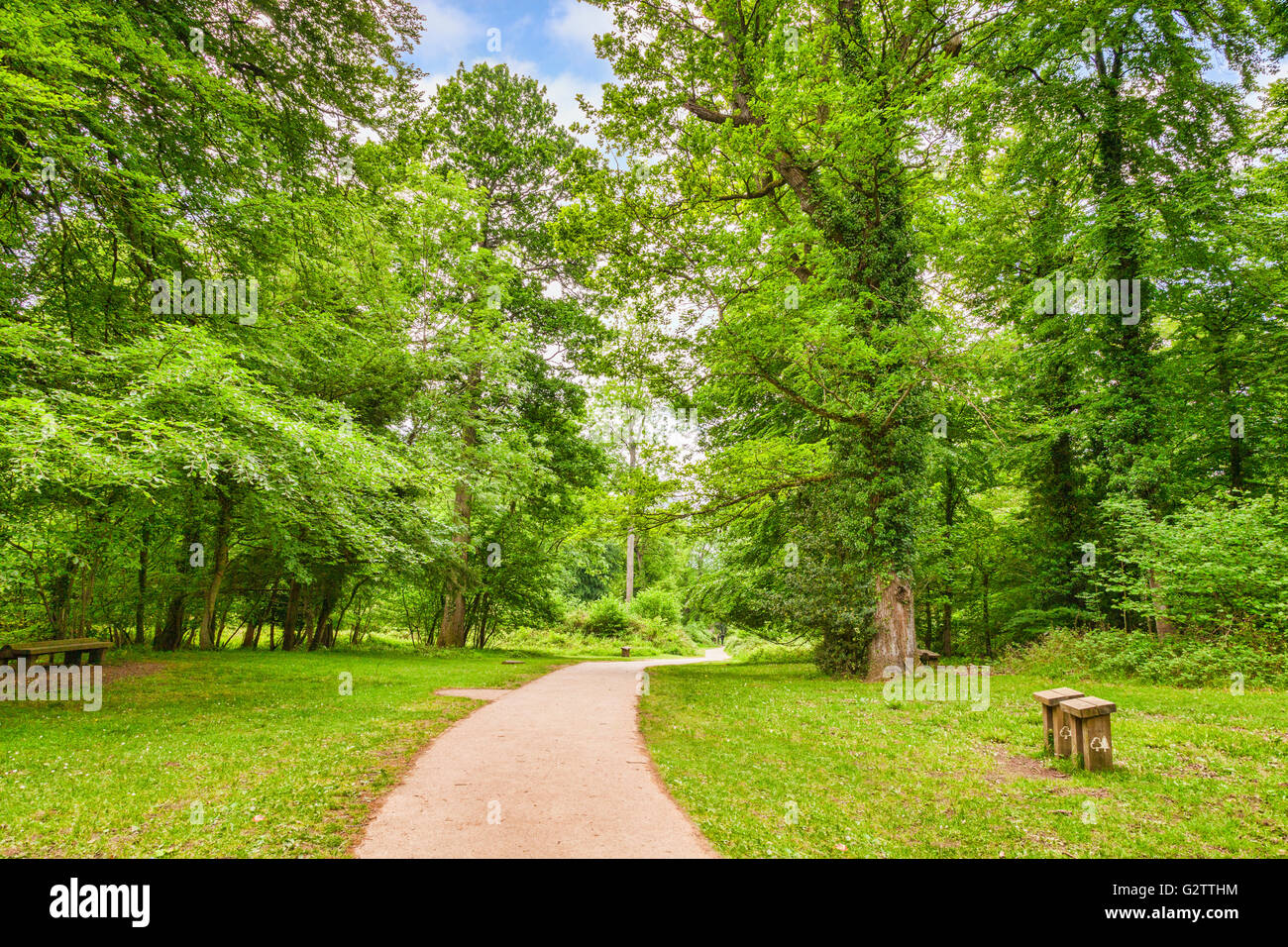 Path if the Forest of Dean, with trees in full, bright, spring, leafy, green, Gloucestershire, England, UK - Stock Image