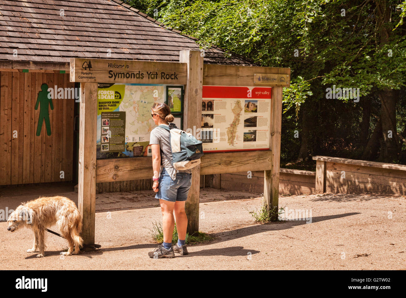 Woman in hiking gear looking at map on noticeboard at Symonds Yat Rock, Gloucestershire, England, UK - Stock Image