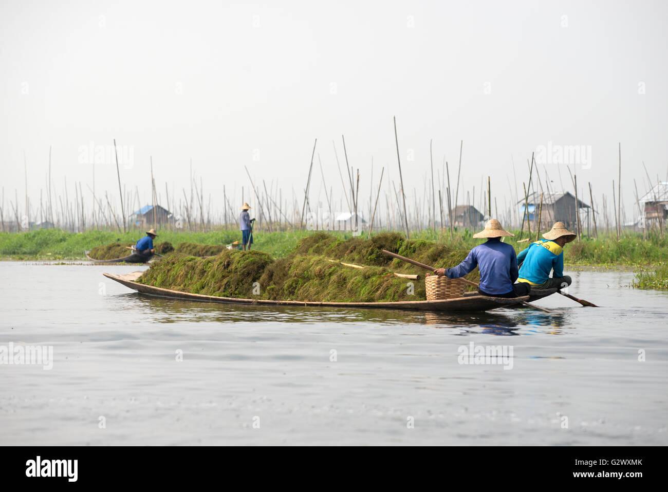 An Intha pirogue full of seaweeds, Inle Lake, Shan State, Myanmar - Stock Image