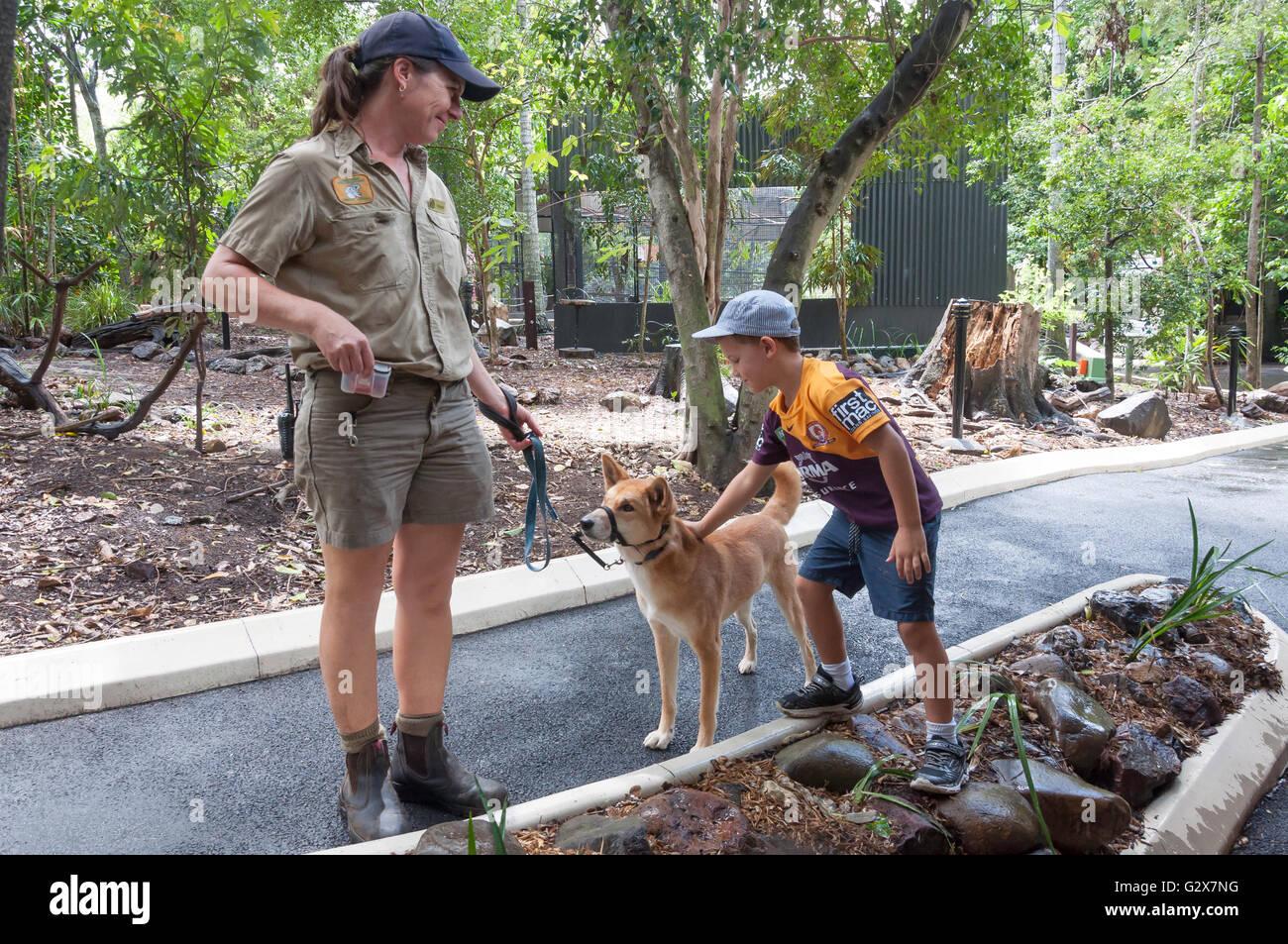 Park guide with Australian Dingo at Lone Pine Koala Sanctuary, Fig Tree Pocket, Brisbane, Queensland, Australia - Stock Image