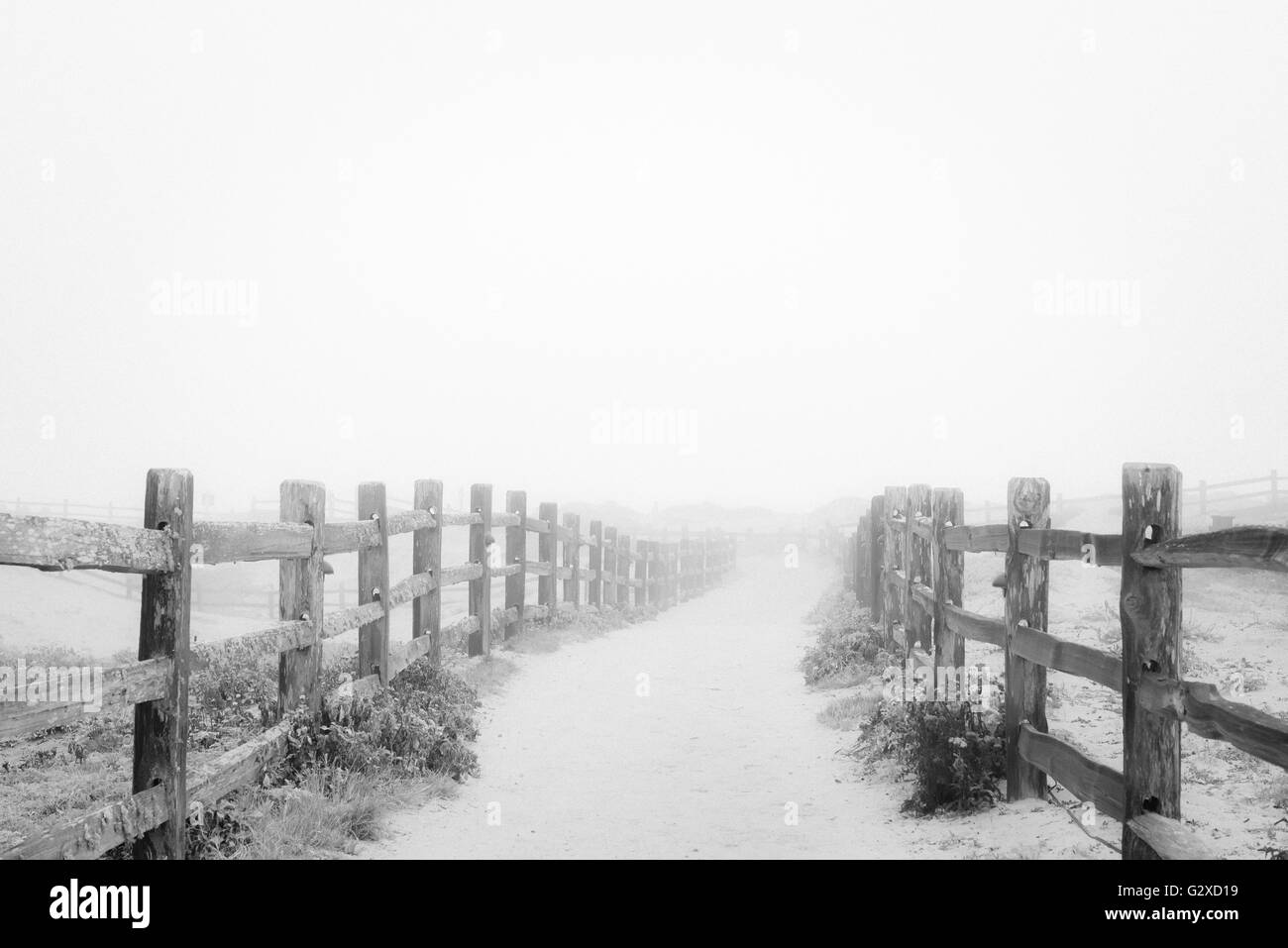 Into the fog. - Stock Image