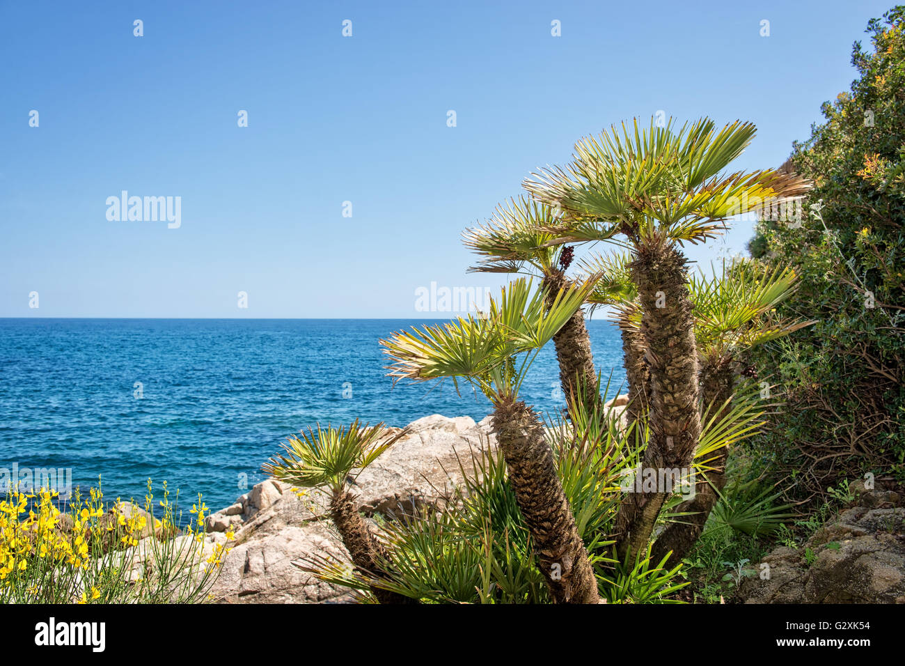 Mediterranean seascape with rocks and palm trees - Stock Image