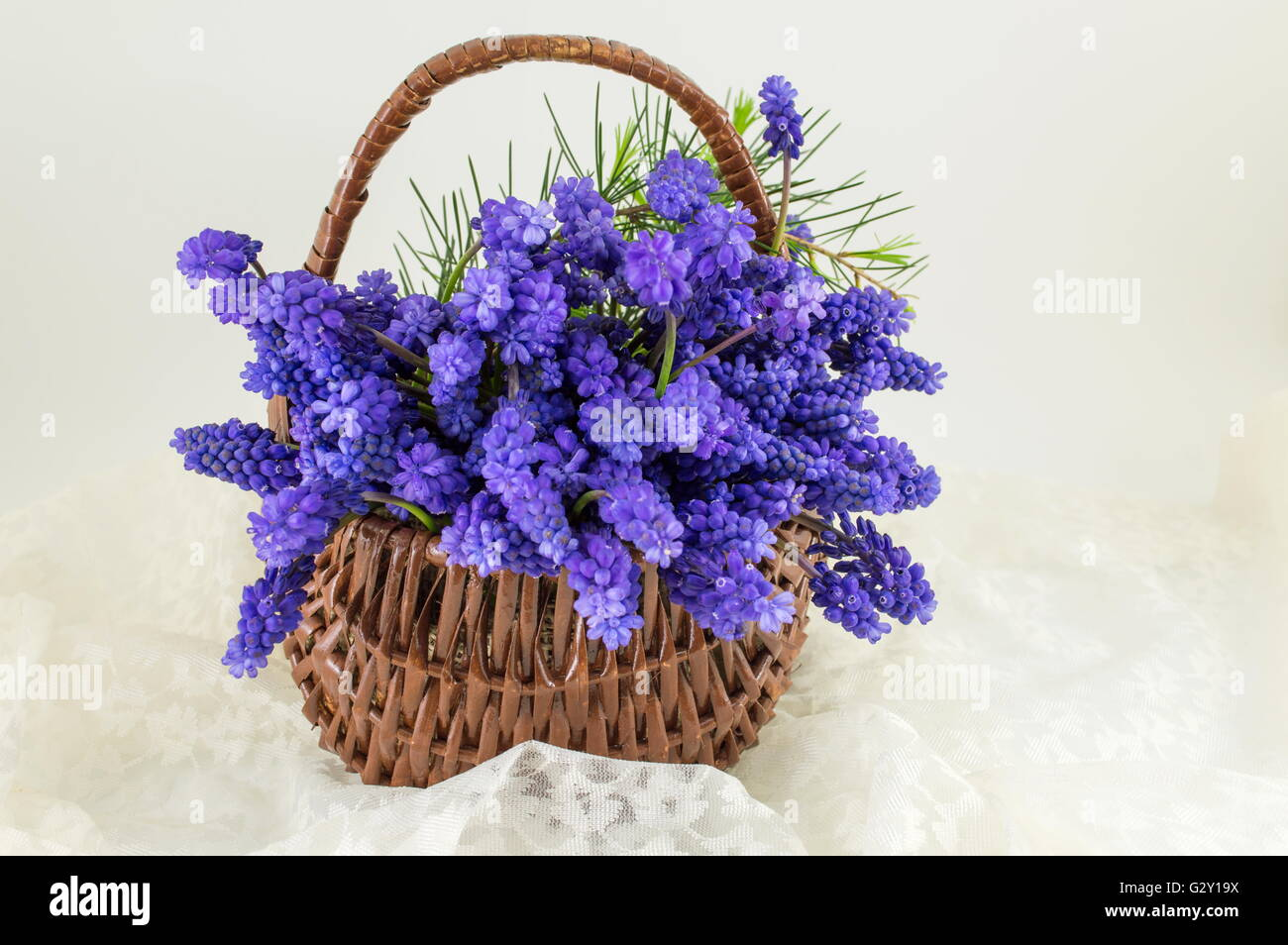 Hyacinth flowers in a wicker basket. Romantic present Stock Photo ...