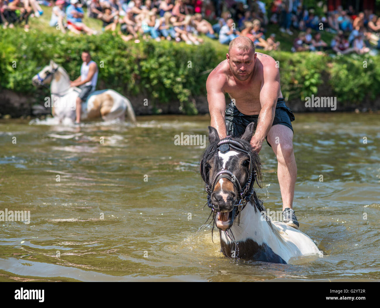 Appleby in Westmorland, Cumbria, UK. 5th June 2016. Travellers ride their horses in the river Eden prior to trading Stock Photo