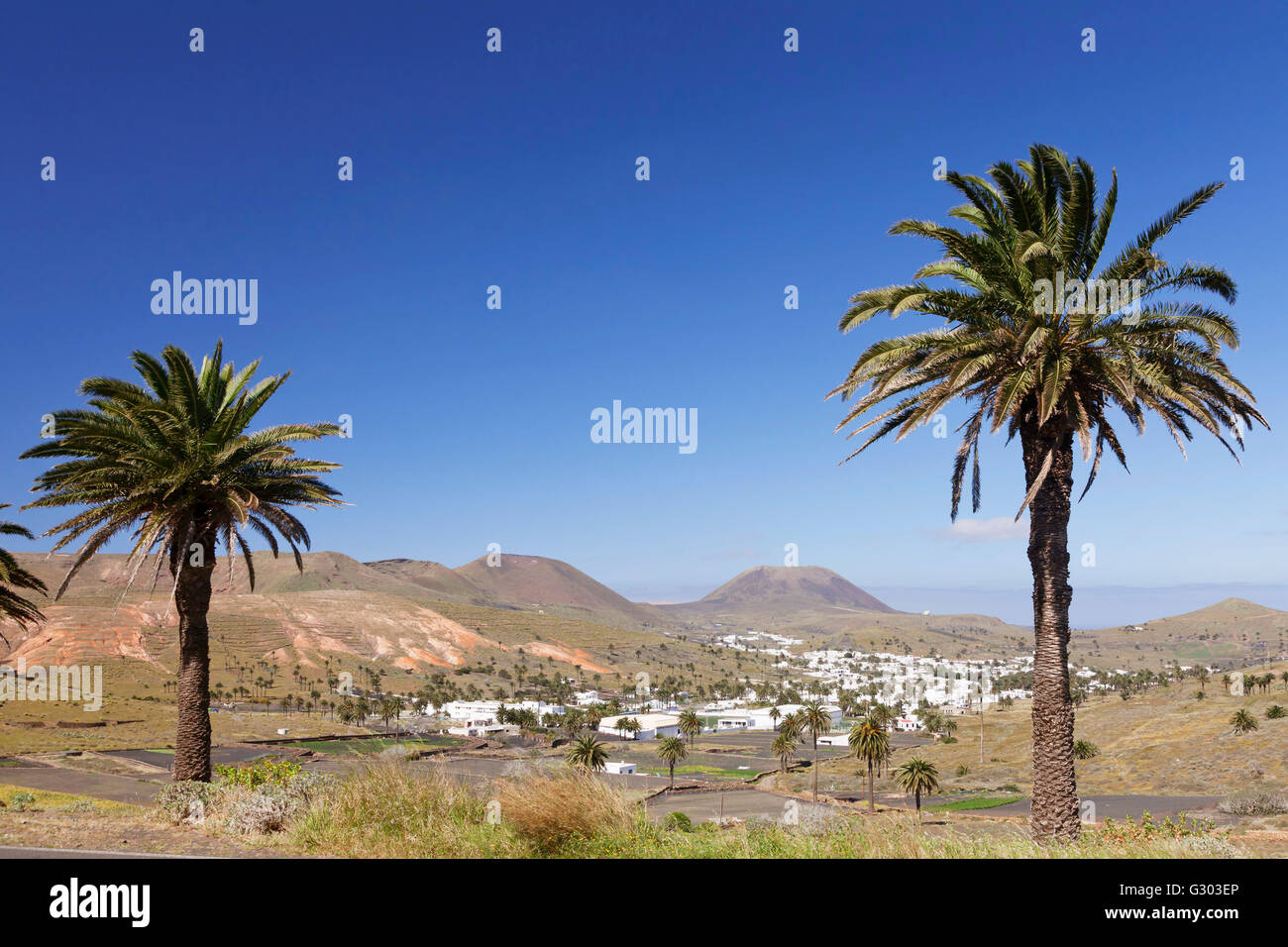 Haría, Valley of a Thousand Palms, Lanzarote, Canary Islands, Spain - Stock Image