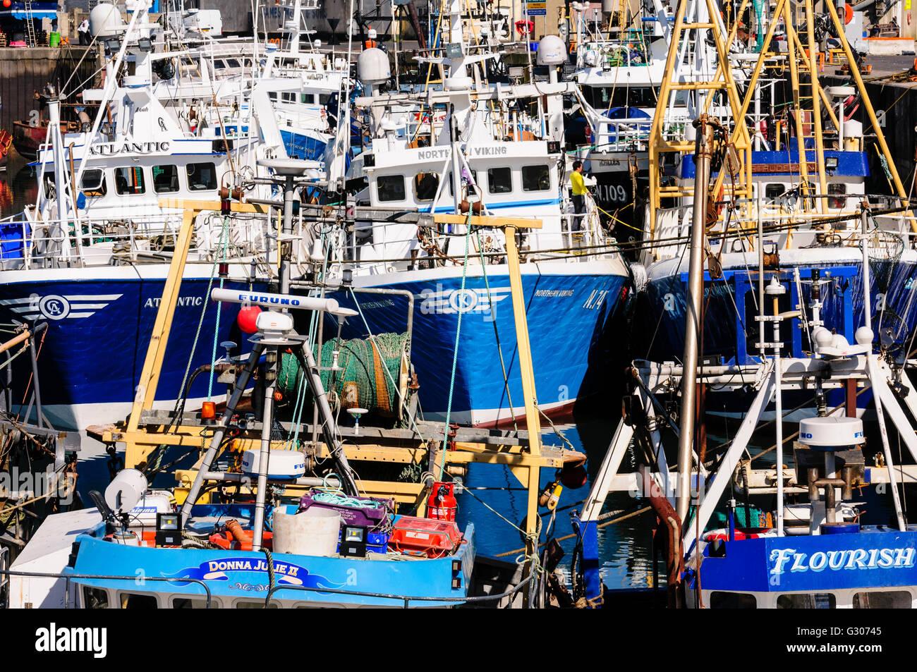 Lots of trawlers moored up in Kilkeel Harbour, Northern Ireland. - Stock Image