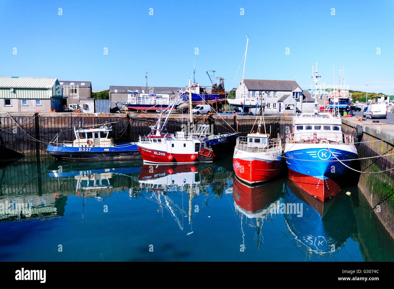 Trawlers berthed at Kilkeel Harbour, Northern Ireland - Stock Image