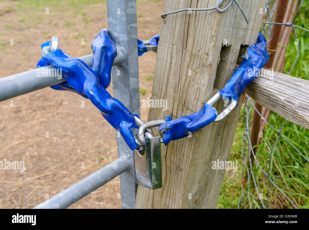 Padlock and chain securing a gate. - Stock Image