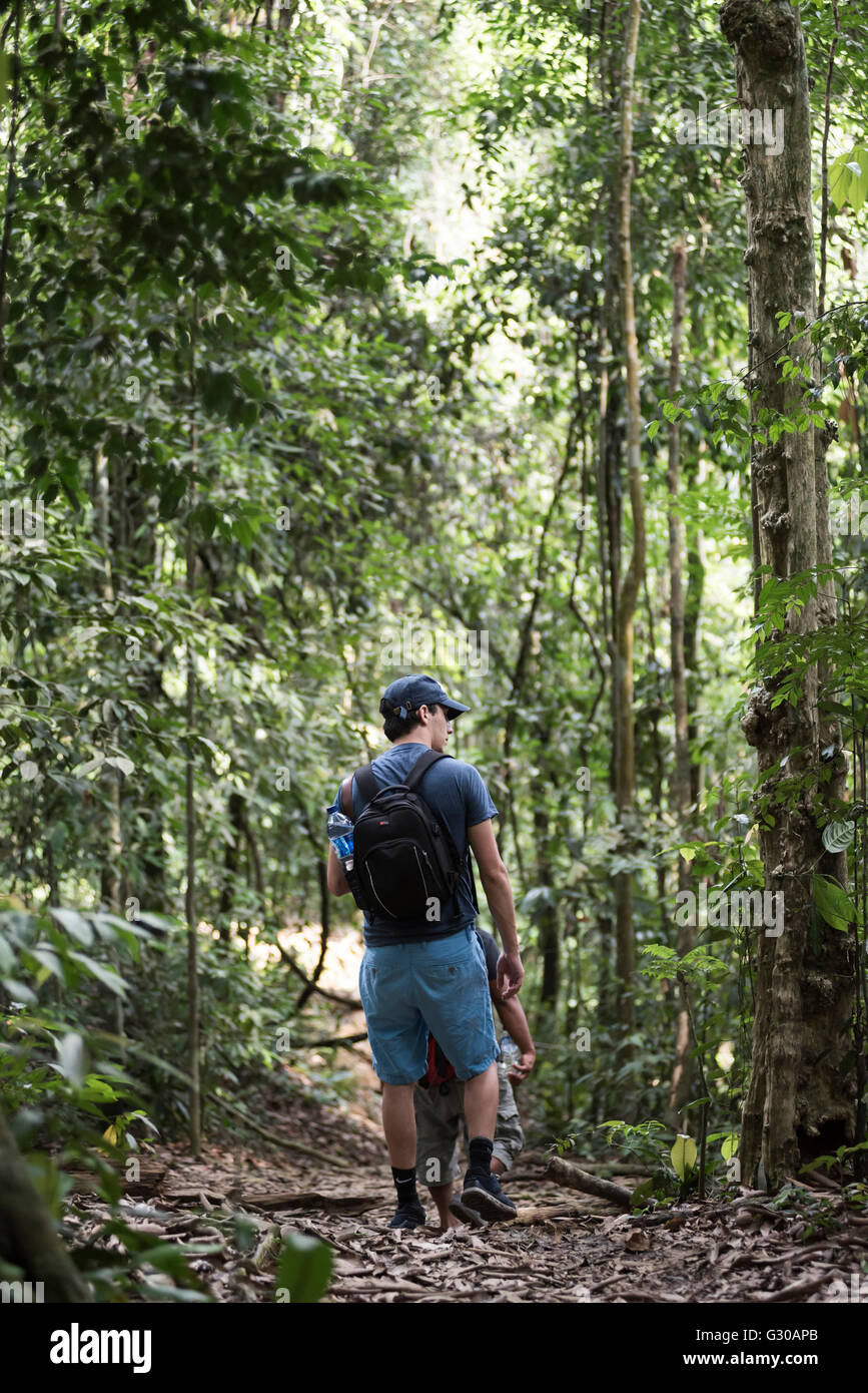 Tourist on a jungle trek in Gunung Leuser National Park, Bukit Lawang, North Sumatra, Indonesia, Southeast Asia, - Stock Image