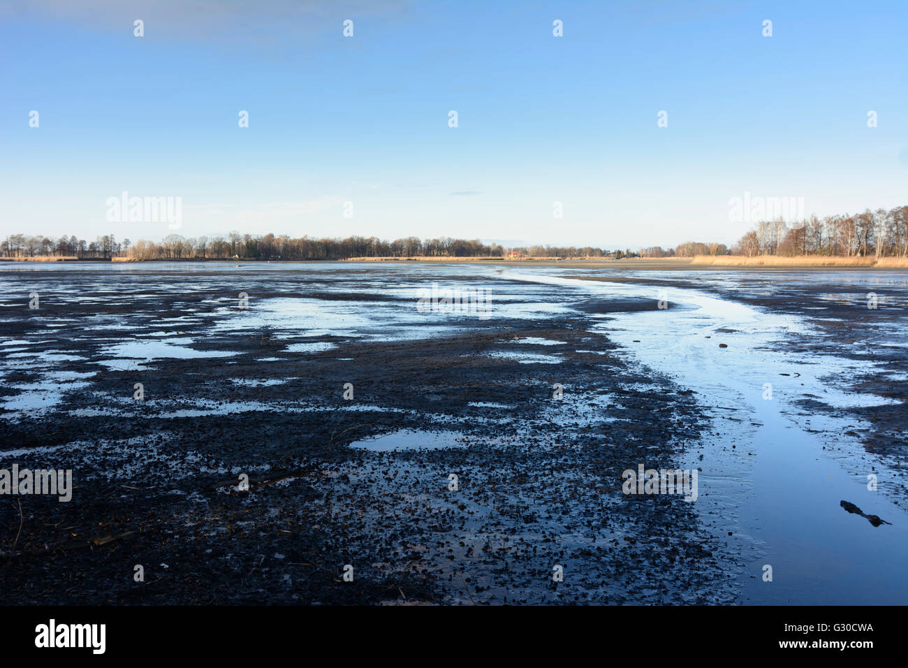 drained pond Hälterteich the Peitzer fishponds, Germany, Brandenburg , Peitz - Stock Image