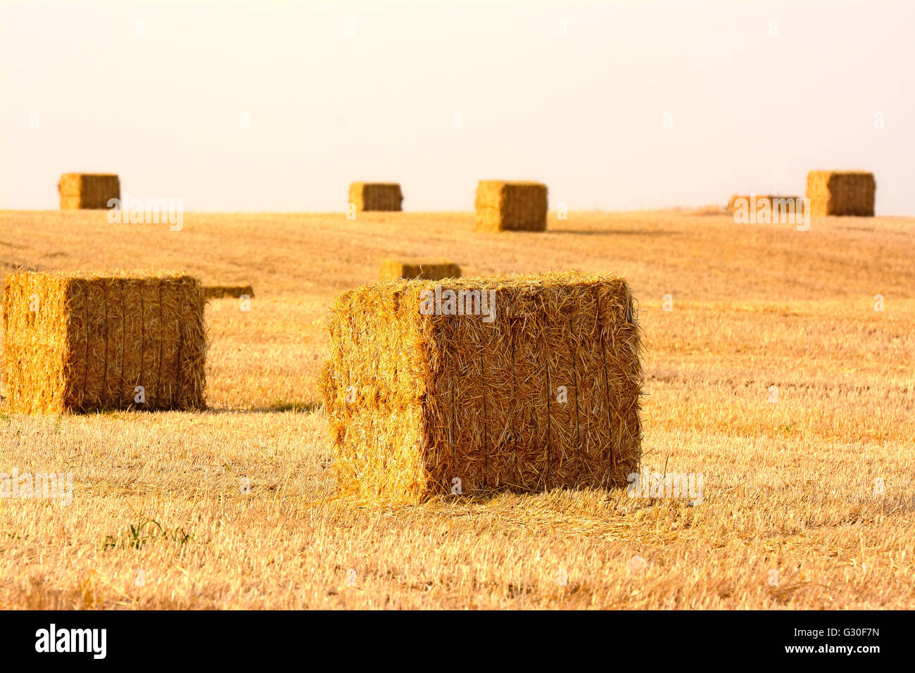 hay bales in the field - Stock Image