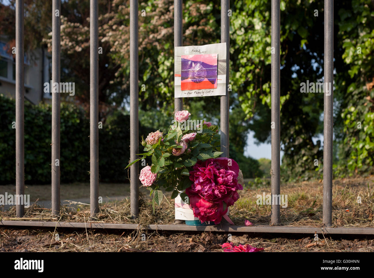 A memorial on park railings for a local cat, killed by a collision with a car on Herne Hill, south London borough - Stock Image
