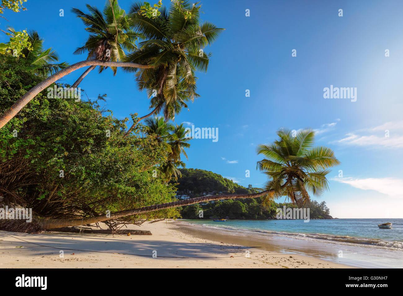 Beach on Mahe island, Seychelles, Indian Ocean, Africa Stock Photo