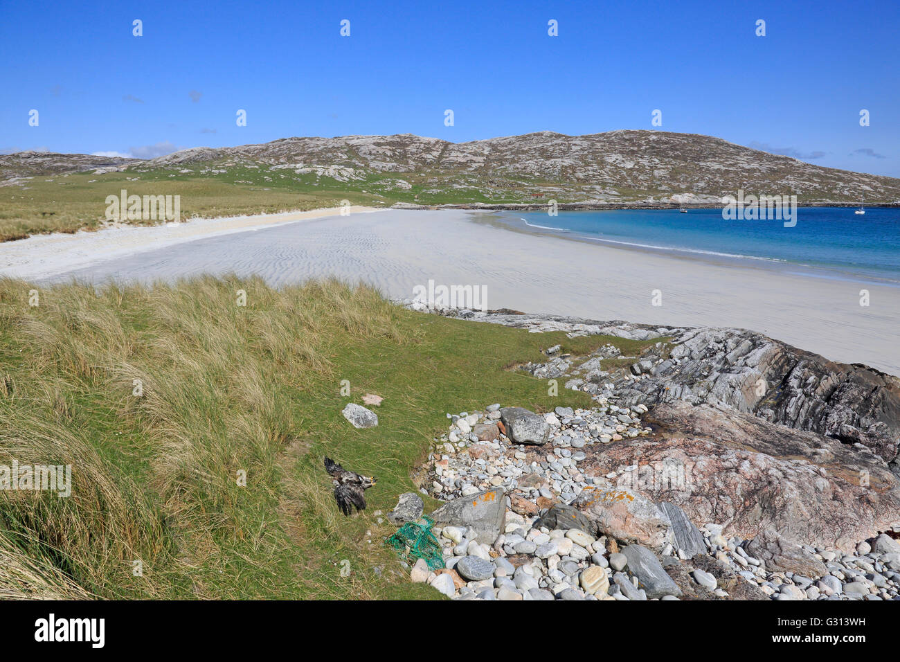 View of white sandy beach on the Island of Taransay in the Outer Hebrides with dead golden eagle in the foreground - Stock Image