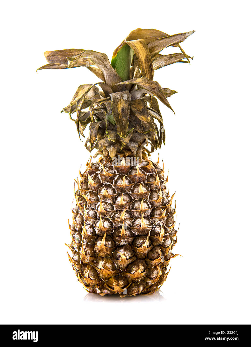 Rotten Pineapple on a white background - Stock Image