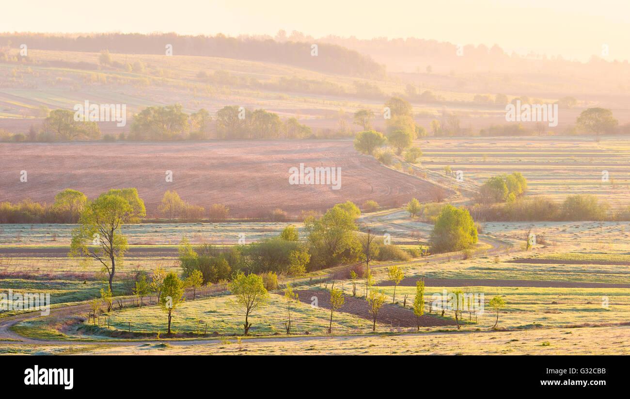 field; road; trees; fog; Sunrise; dramatic sunlight; - Stock Image