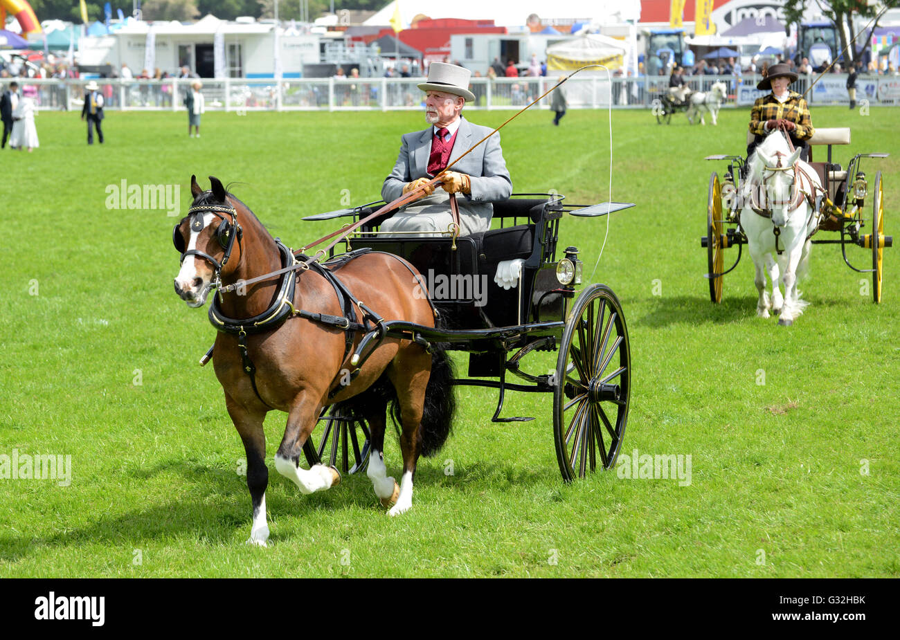 Man driving horse and rig British Driving Society Show Staffordshire County Show - Stock Image
