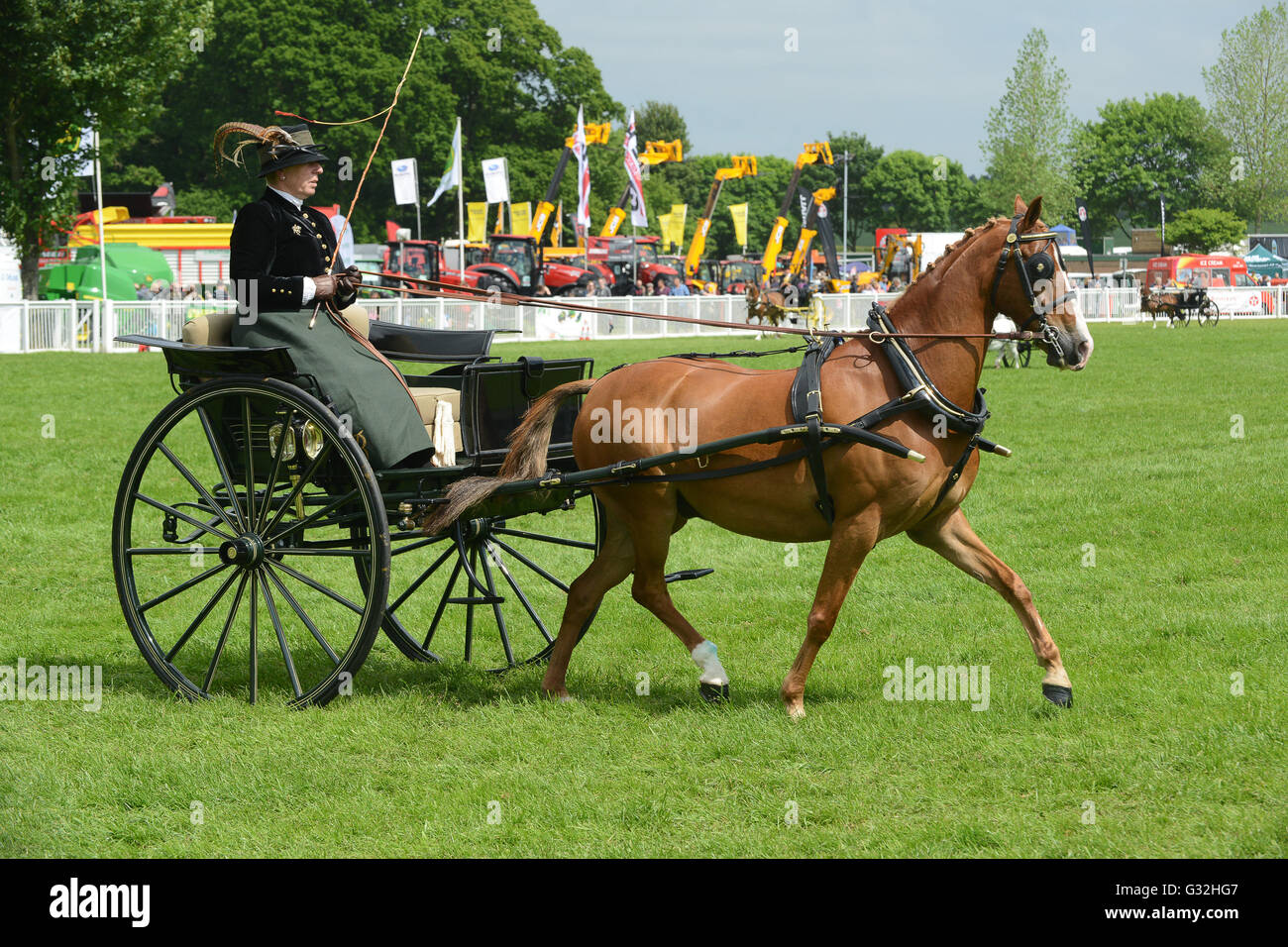 Woman driving horse and rig British Driving Society Show Staffordshire County Show - Stock Image
