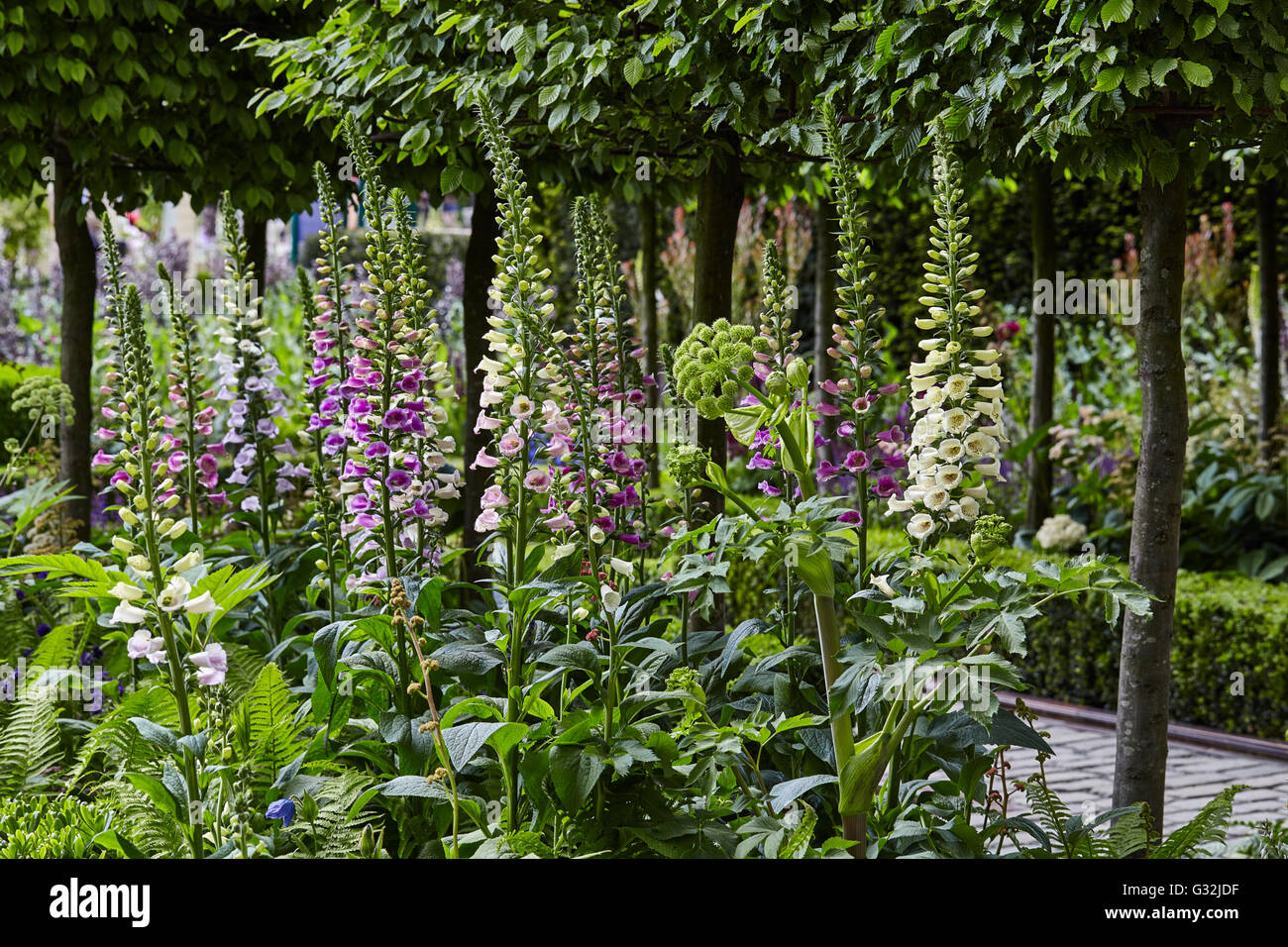 Chelsea Flower Show 2016 Husqvarna Garden Charlie Albone - Stock Image