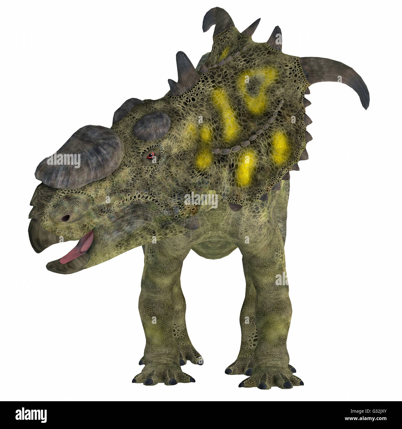 Pachyrhinosaurus was a ceratopsid herbivorous dinosaur that lived in the Cretaceous Period of Alberta, Canada. Stock Photo