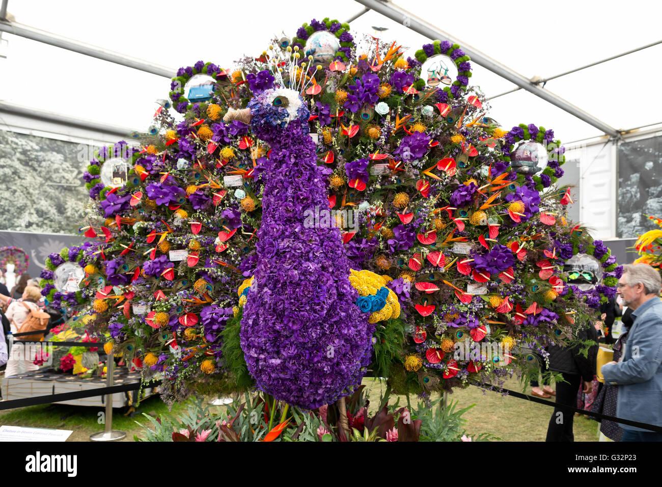 RHS Chelsea Flower Show 2016 Great Pavilion Flower Peacock Stock Photo