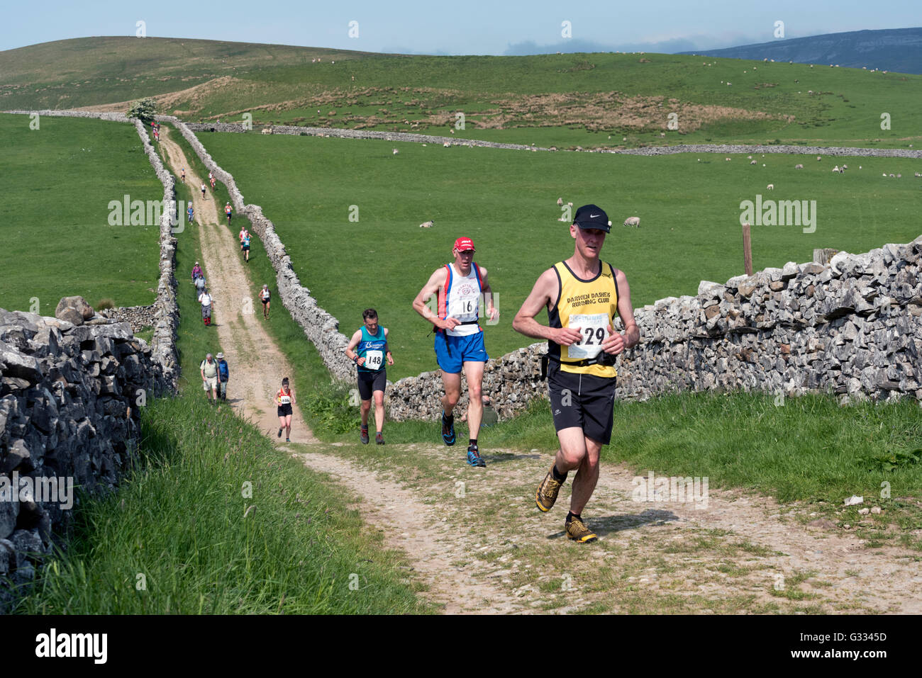 Runners on The Pennine Way taking part in the Horton-in-Ribblesdale Gala Fell Race, Yorkshire Dales National Park, - Stock Image