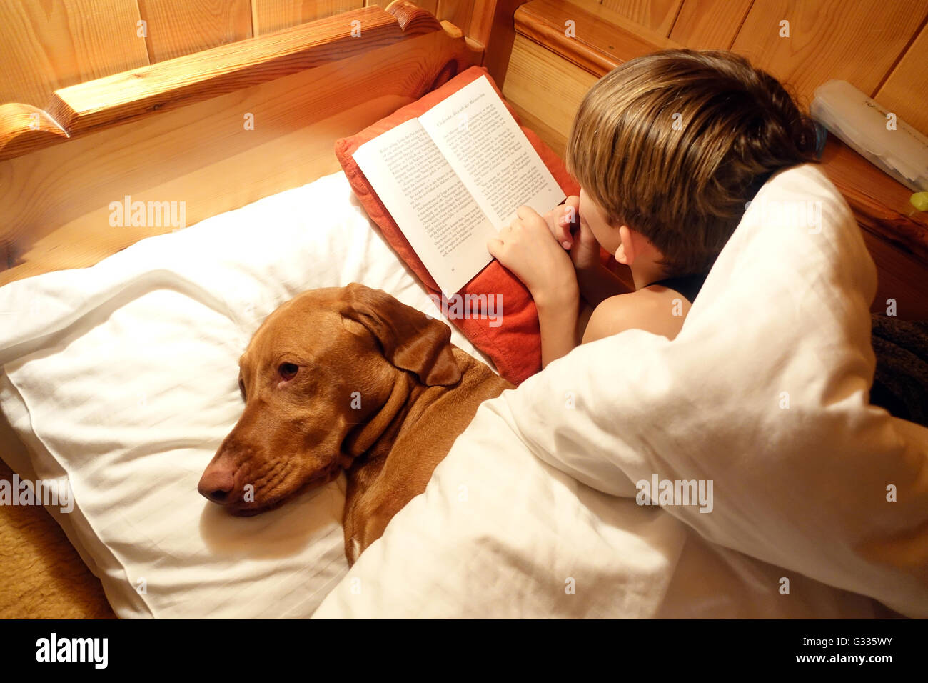 Krippenbrunn, Austria, boy is with his dog in bed reading a book - Stock Image