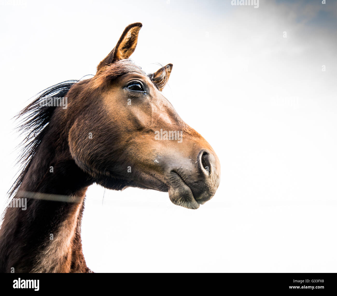 Horse behind the fence. - Stock Image
