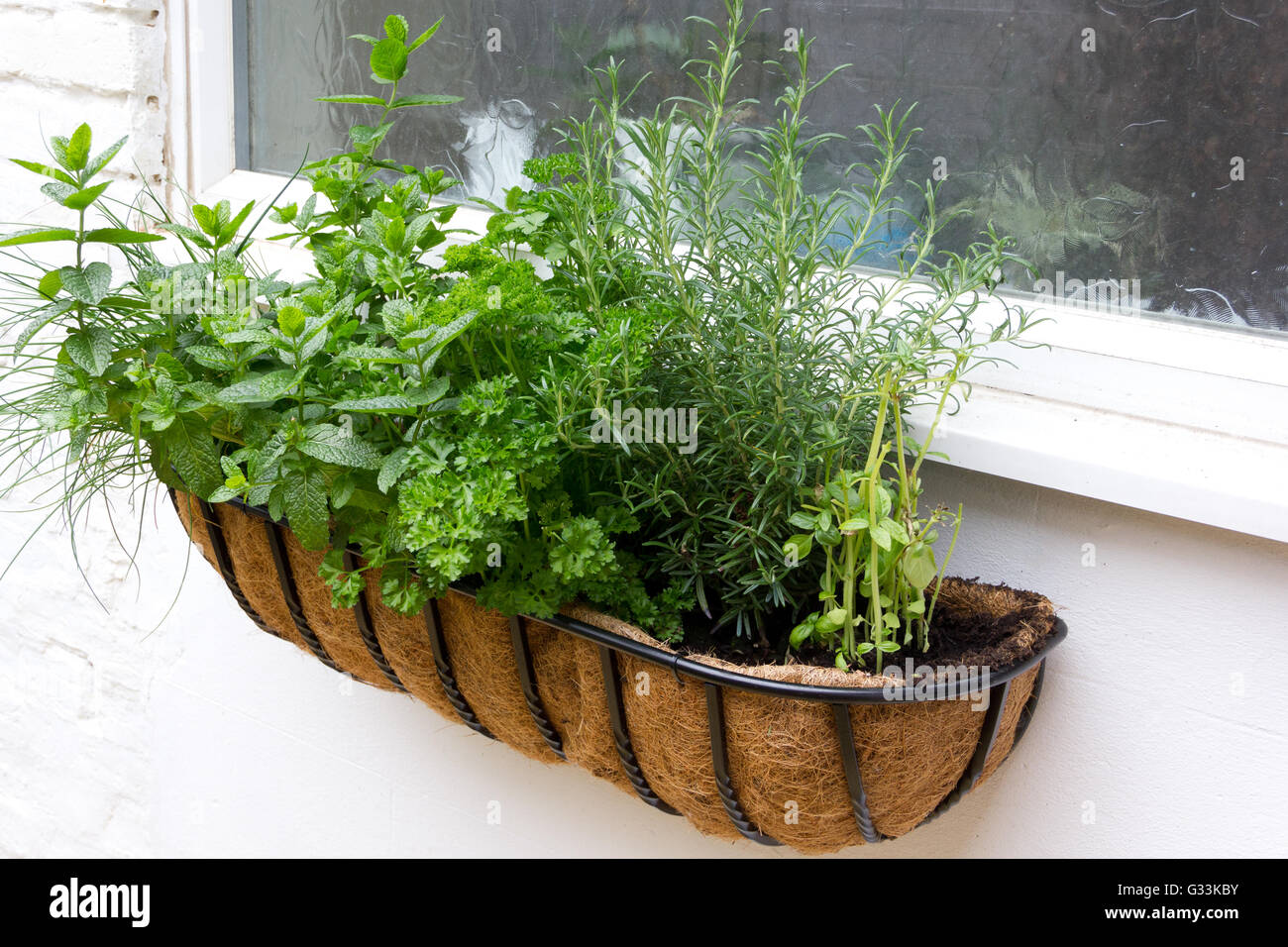 Window herb box Stock Photo