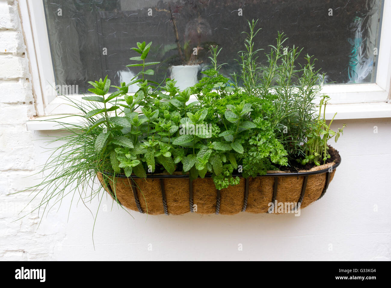 Window herb box - Stock Image