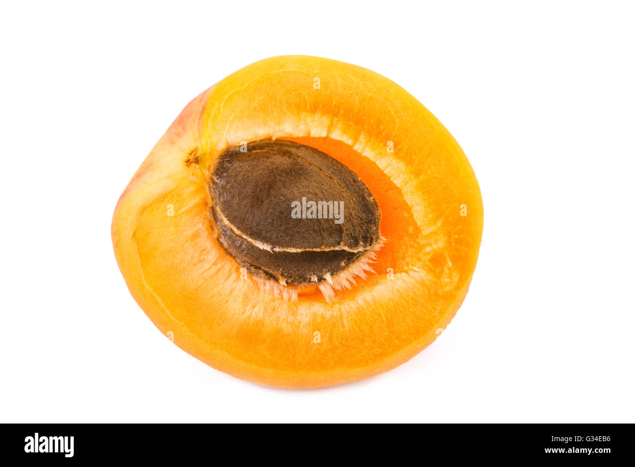 Apricot half with fruit kernel on white background. Closeup. - Stock Image