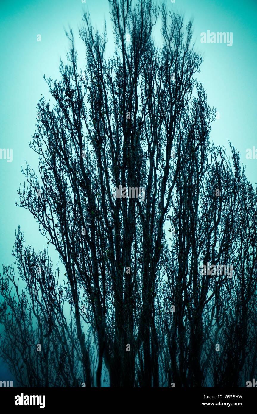 Sinister tree in winter - Stock Image
