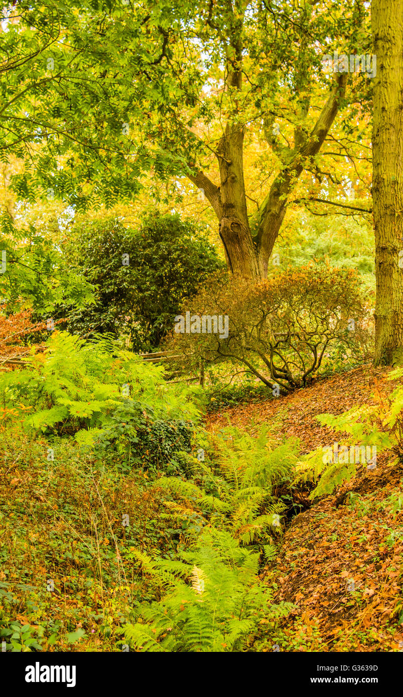 Glorious autumn colours caught in a stream at Wisley, Surrey, UK. - Stock Image