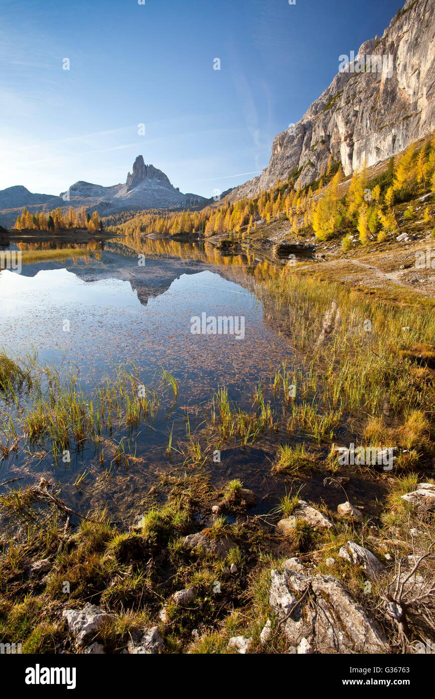 The peak Becco of Mezzodi reflected in Lake Federa surrounded by colorful woods in autumn Belluno Dolomites Veneto - Stock Image