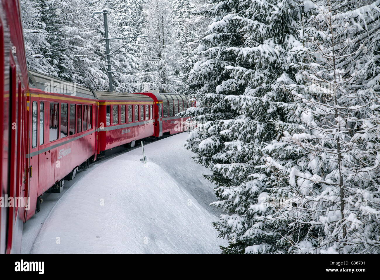 Bernina Express Train surrounded by snowy woods Filisur Canton of Graubünden Switzerland Europe - Stock Image