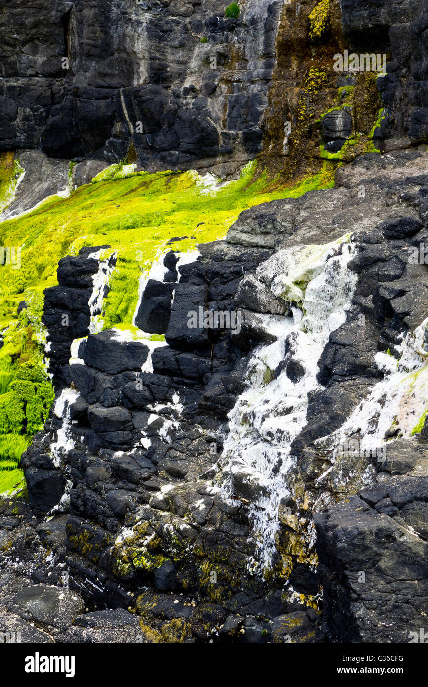seaweed stain on rocks - Stock Image