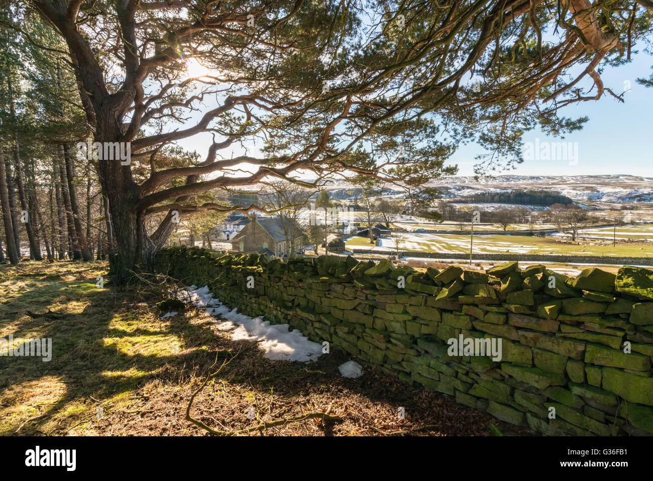 The landscape at Bowlees picnic area, Barnard Castle, Durham - Stock Image