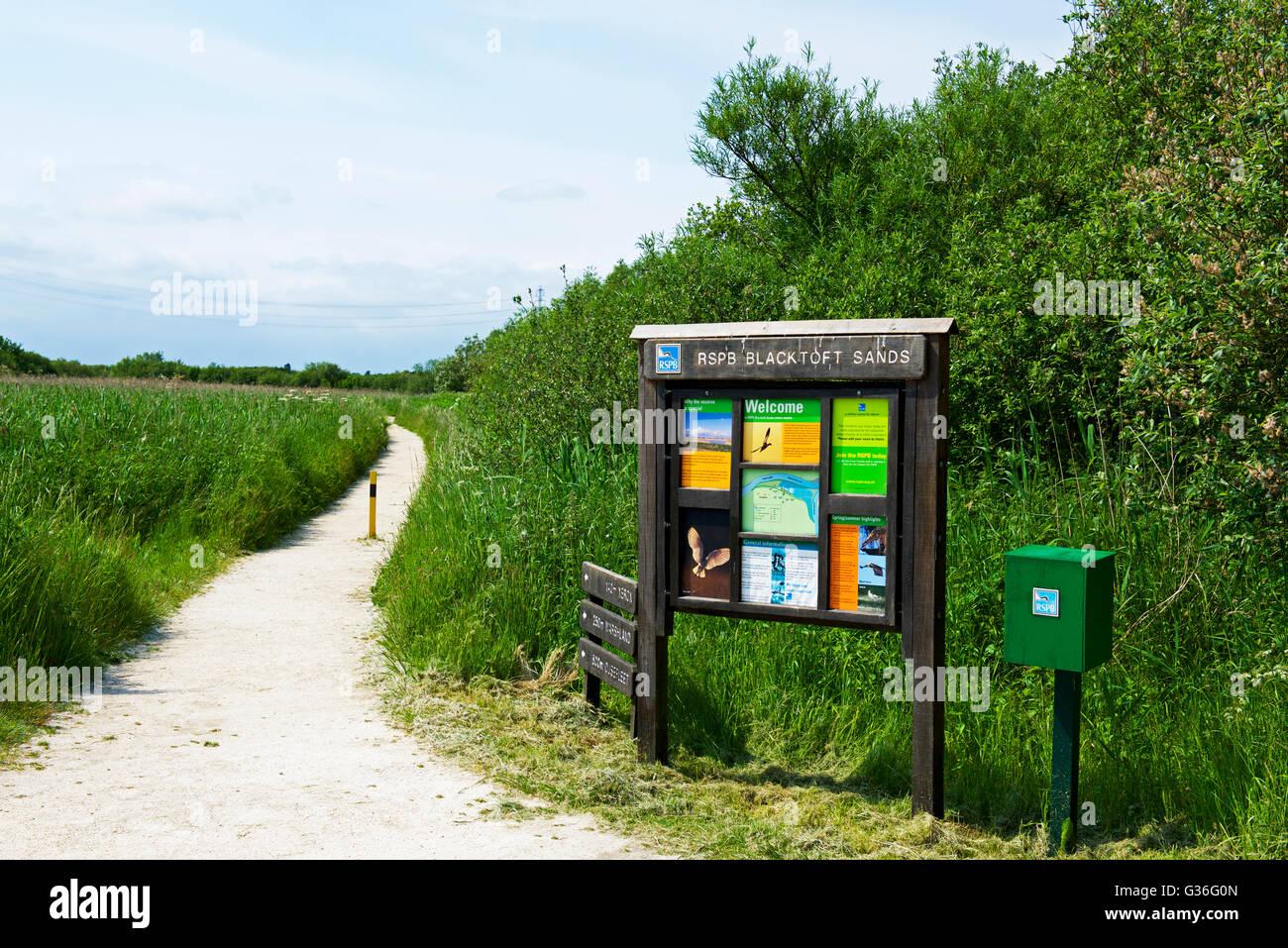 Blacktoft Sands, an RSPB reserve, East Yorkshire, England UK - Stock Image