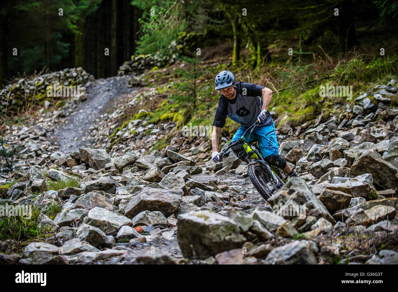 A mountain biker rides a trail at Bike Park Wales near Merthyr Tydfil in South Wales. - Stock Image