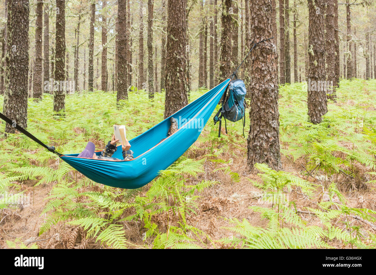 Mature female hiker reading a book in hammock in pine forest. Possible uses: mature backpacker/retirement/adventure/savings... - Stock Image