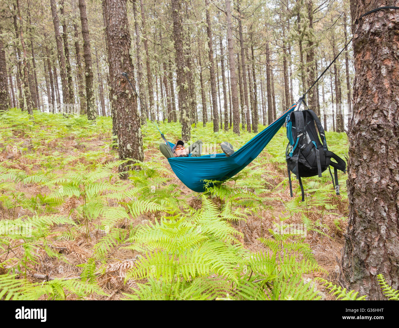 Mature male hiker relaxing in hammock in pine forest. Possible uses: mature backpacker/retirement/adventure/savings - Stock Image