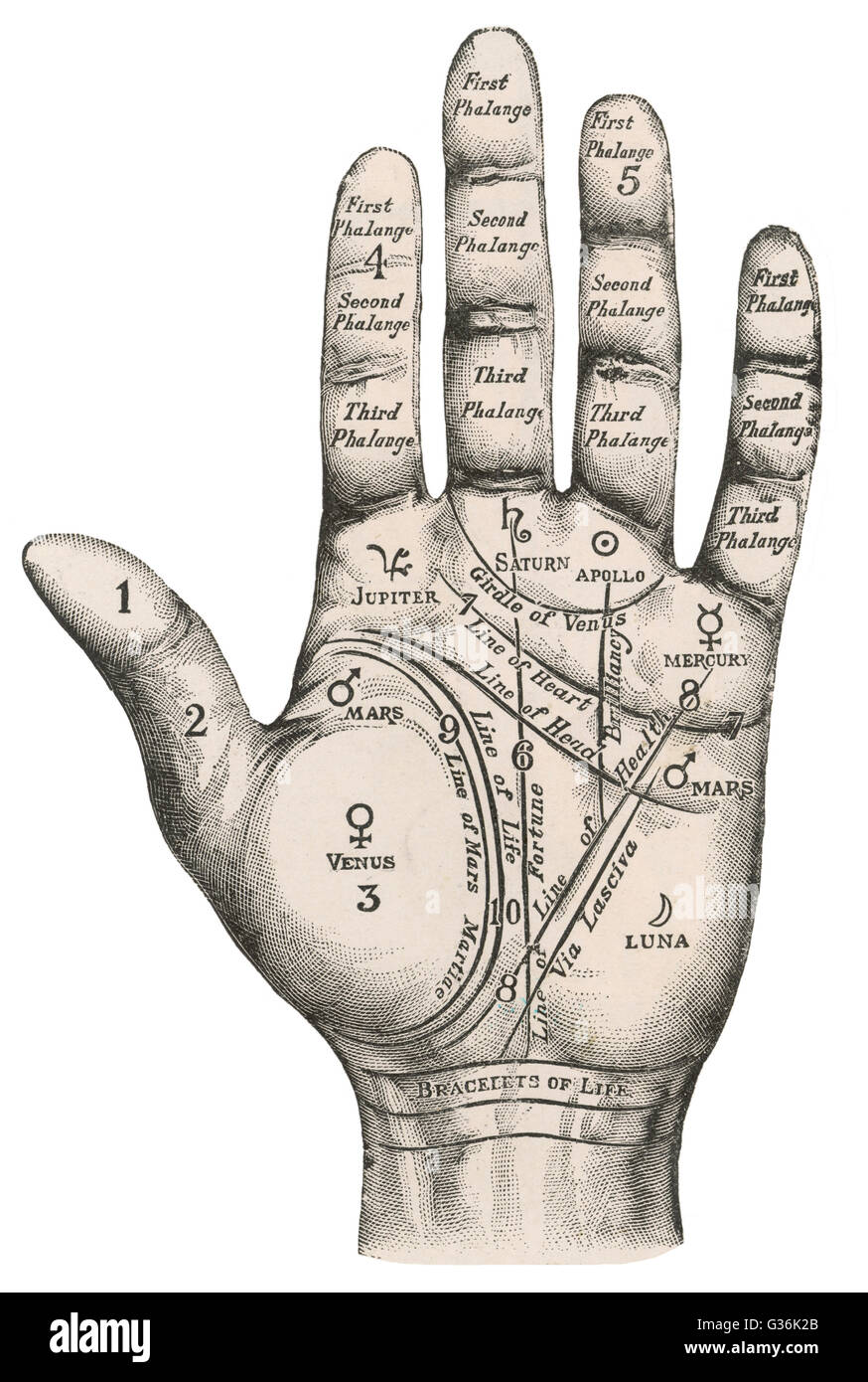 Areas Of Head Diagram Guide And Troubleshooting Wiring For Early Corvair Conversion From Generatoir To A Palmistry Map The Hand Labelling Different Stock Photo 105252851 Alamy Made Wire Hair