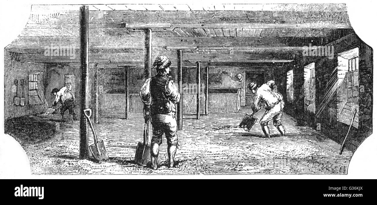 Cultivation of beer. Steeping, couching and  flooring malt         Date: 1830s - Stock Image