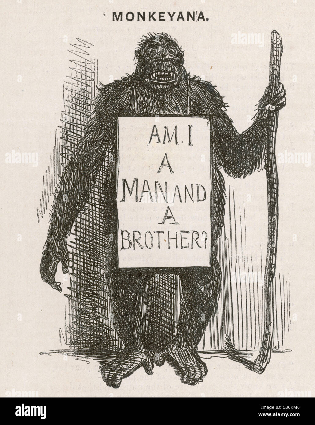 Satire of Charles Darwin. His theory of evoution is satirised as Monkeyana - Am I a man and a brother?         Date: - Stock Image