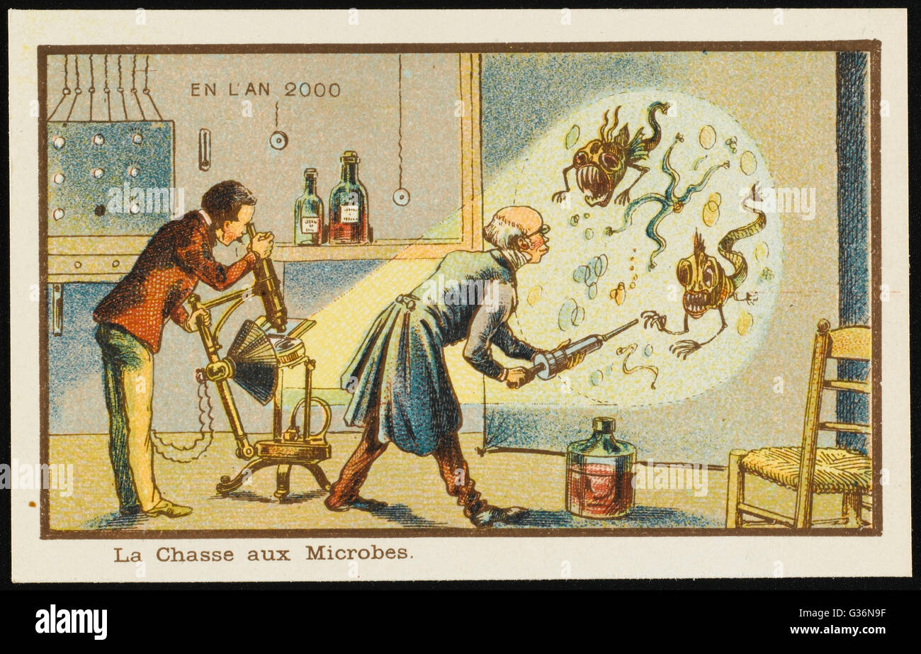 A scientist studies microbes magnified on a screen.       Date: 1899 - Stock Image