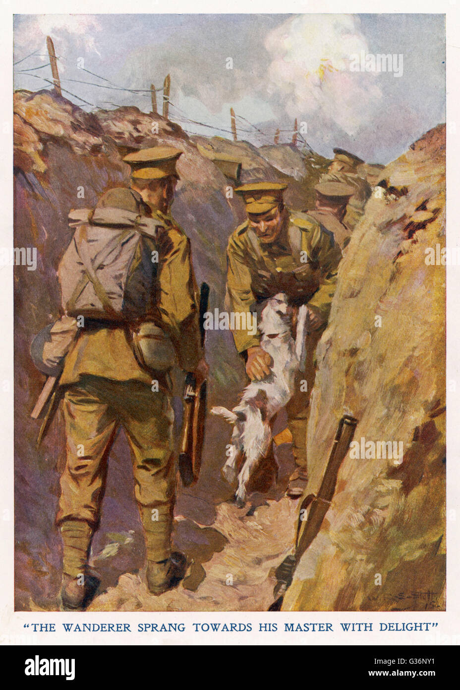 Private Brown of the North Staffordshires, in the trenches in France, is found by his pet terrier dog which has - Stock Image