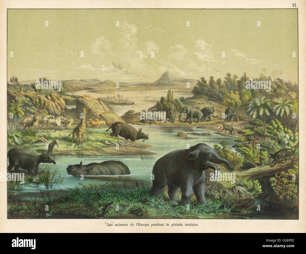 View of a prehistoric landscape, with animals, during the Tertiary Era in Europe (Palaeocene to Pliocene).      - Stock Image