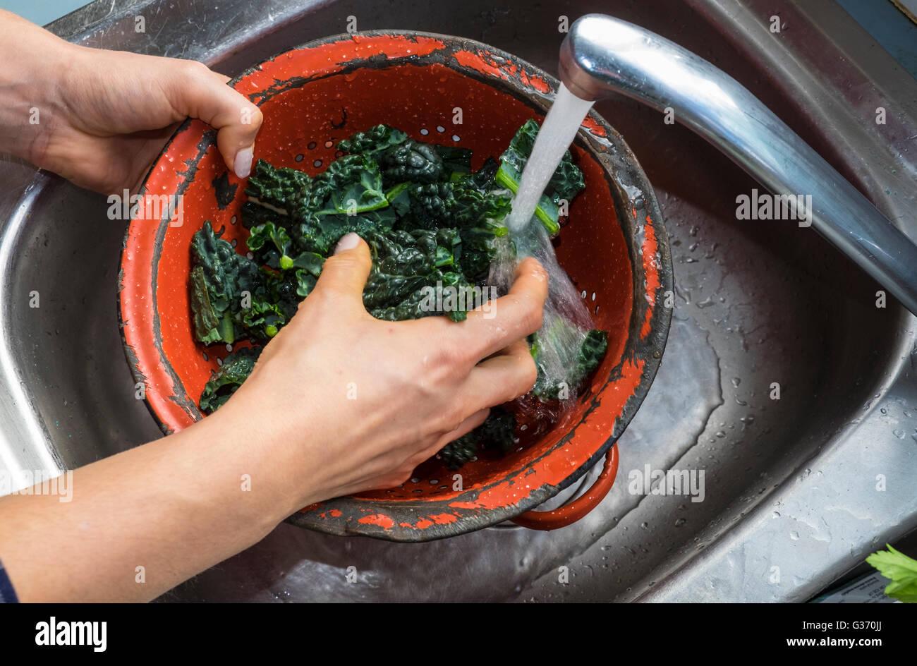 Washing chopped Tuscan kale under running water in red colander - Stock Image
