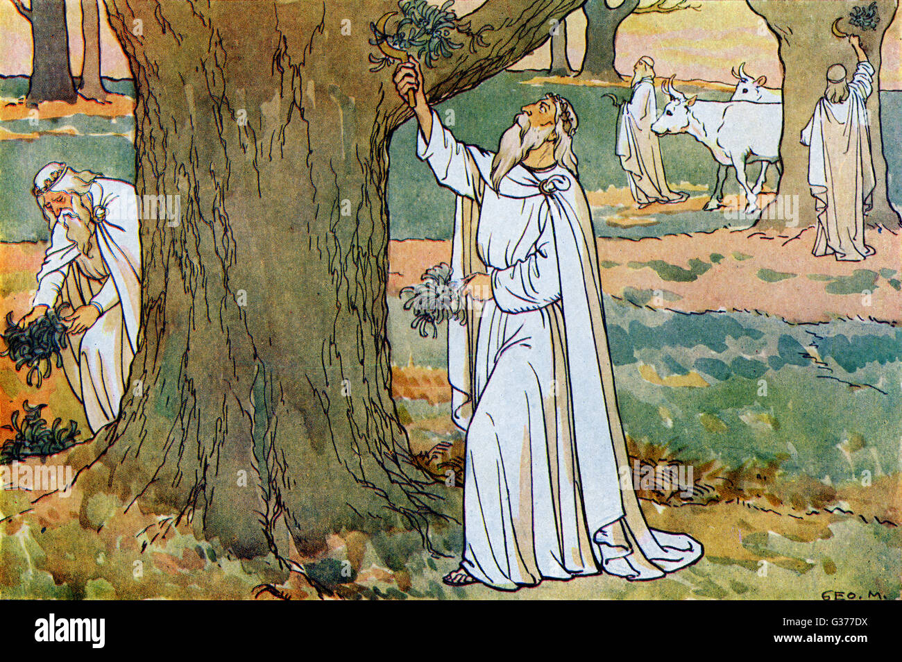 The Druids were highly respected by the Britons because of their wisdom and used to collect mistletoe to give to - Stock Image